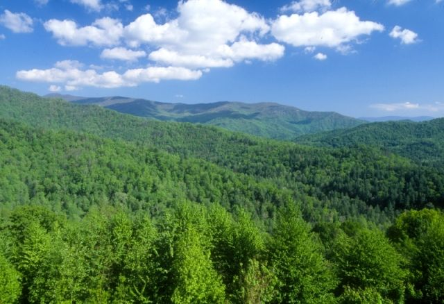 national forest info, high south blue ridge rentals